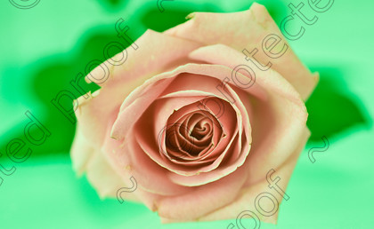 misc (027 of 27) 