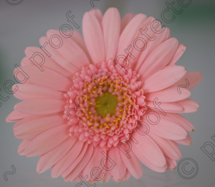 misc (025 of 27) 