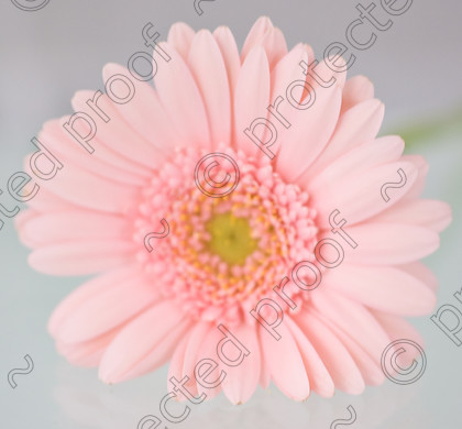 misc (009 of 27) 