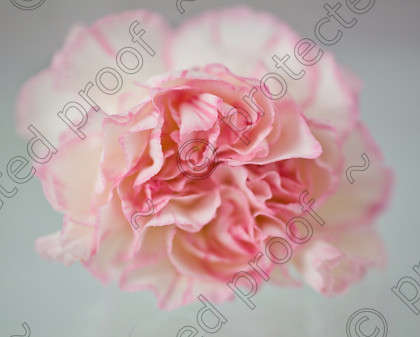 misc (015 of 27) 