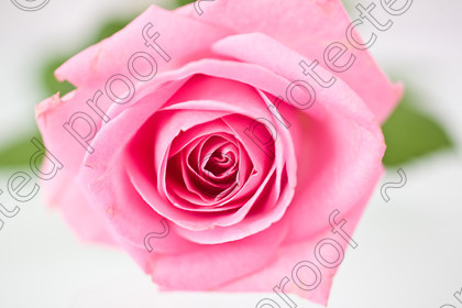 misc (014 of 27) 