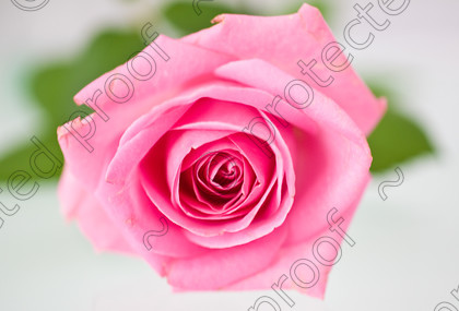 misc (013 of 27) 