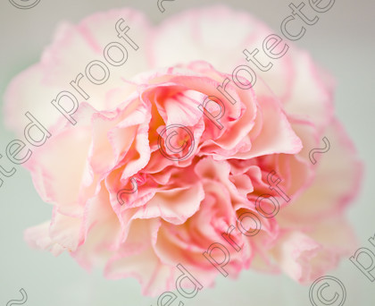 misc (017 of 27) 