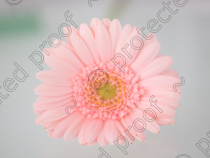 misc (010 of 27) 